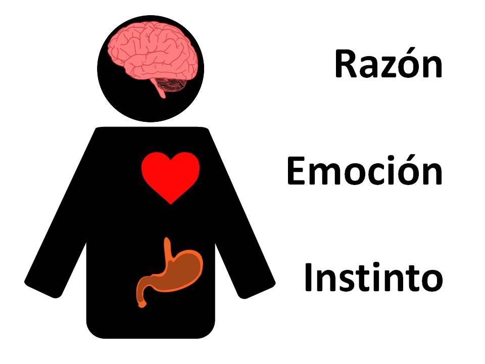 razon emocion corazon reptiliano neocortex limbico