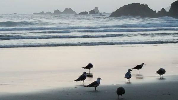 Atardecer en la playa con un grupo de gaviotas en la orilla. Al fondo el mar con olas y espuma. Casi se puede oír su sonido