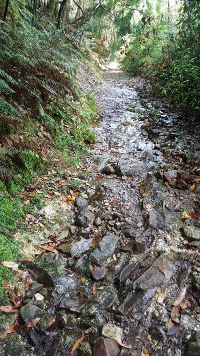 Sendero con inclinación estrecho con superficie angosta lleno de piedras resbaladizas por la humedad del terreno. Hay musco y helechos.